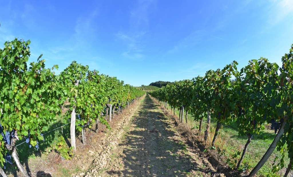 vin-bergerac-monbazillac-gerales-dsc_4068