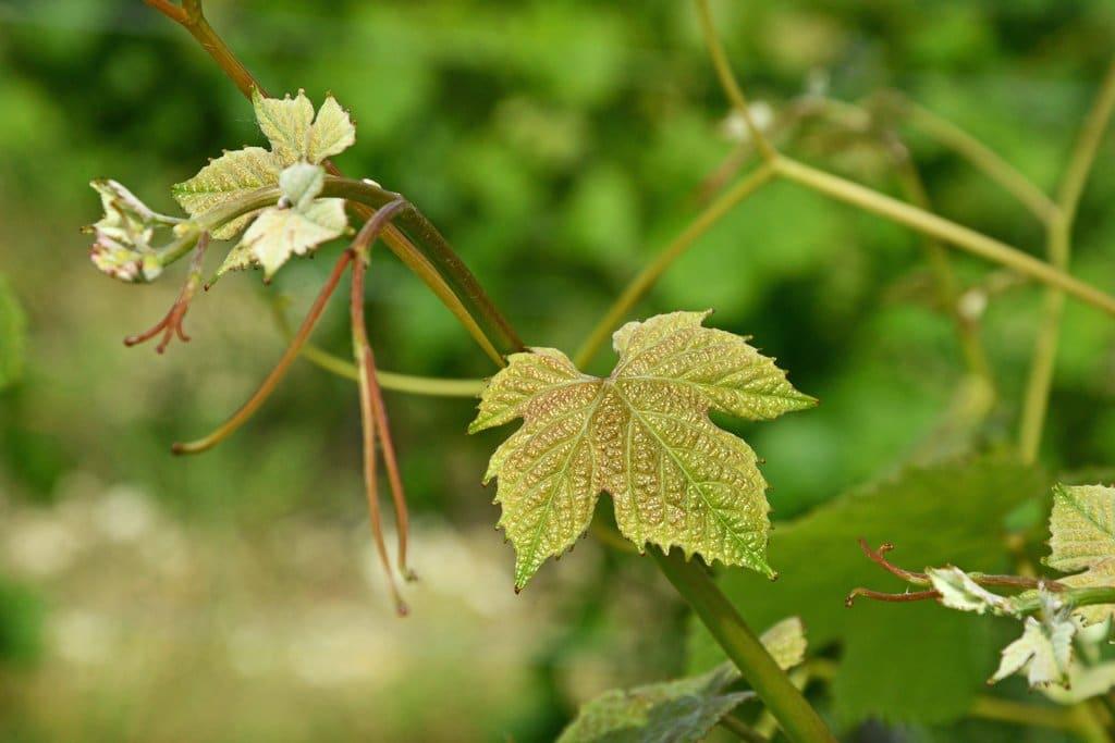 vin-bergerac-monbazillac-gerales-dsc_3897