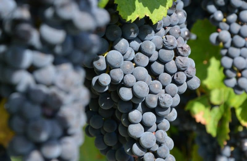 vin-bergerac-monbazillac-gerales-dsc_4037