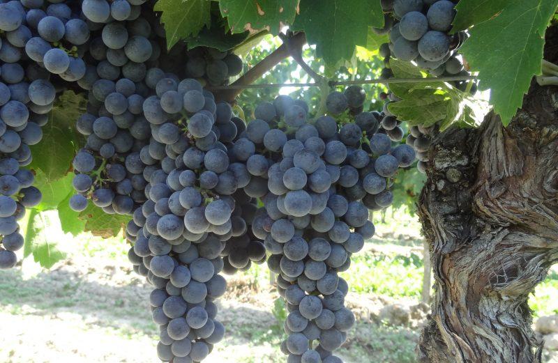 vin-bergerac-monbazillac