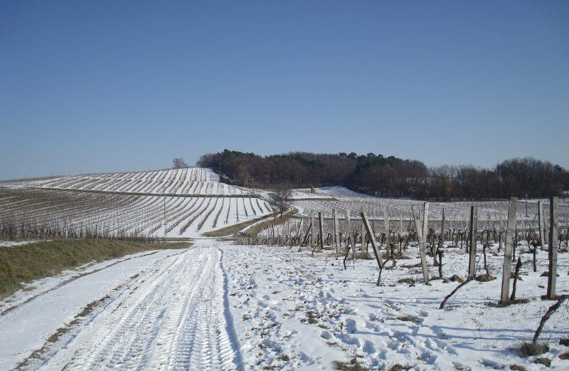 vin-bergerac-monbazillac-gerales