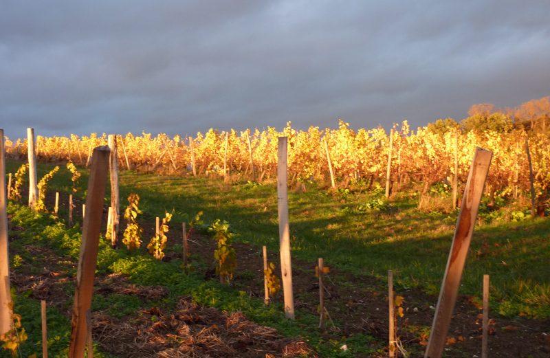vin-bergerac-monbazillac-gerales-foie-gras-au-torchon